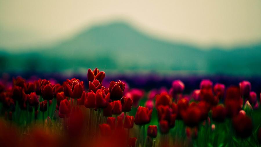 Красивые цветы заставки