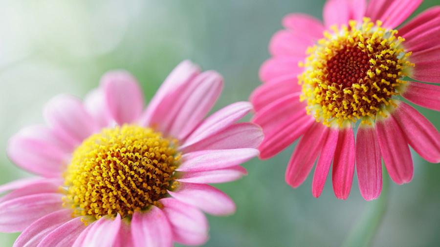 Картинки лето растения