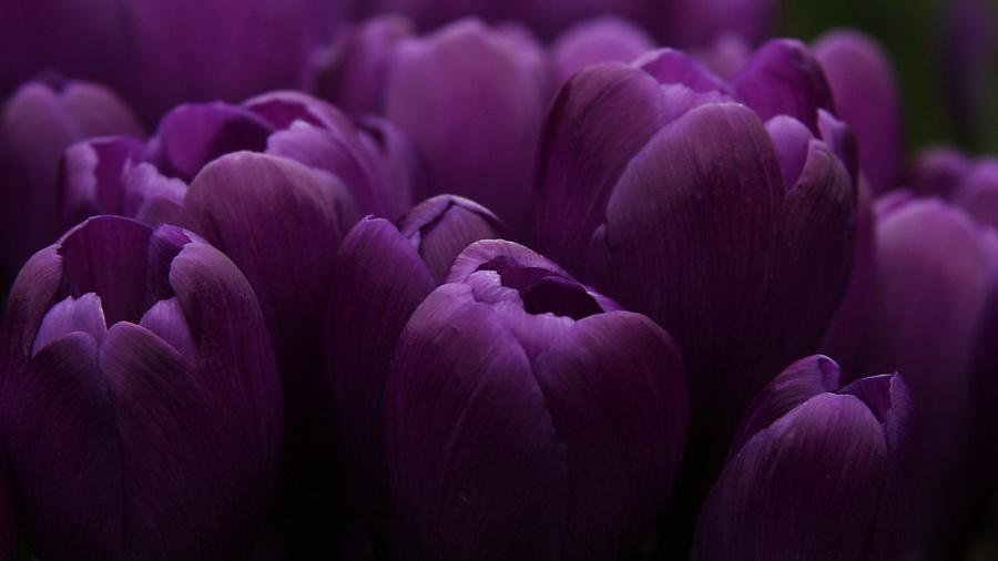 Фиолетовые цветы обои