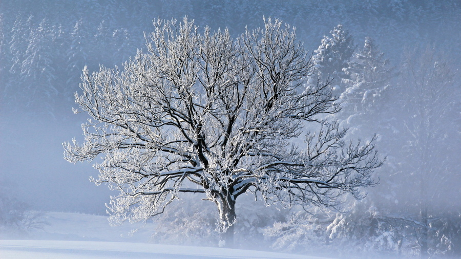 Деревья зима снег картинки