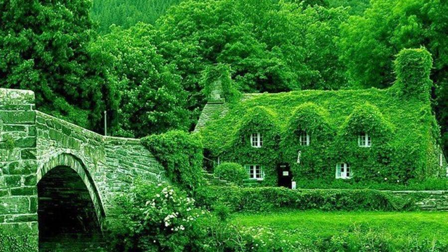 Картинки дома в лесу природа обои