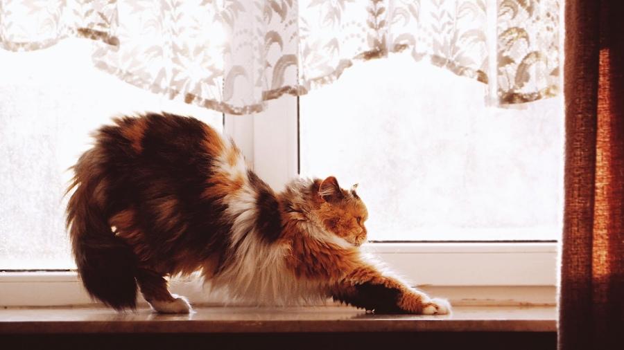 Домашние животные - Фото домашних животных - Виды 9