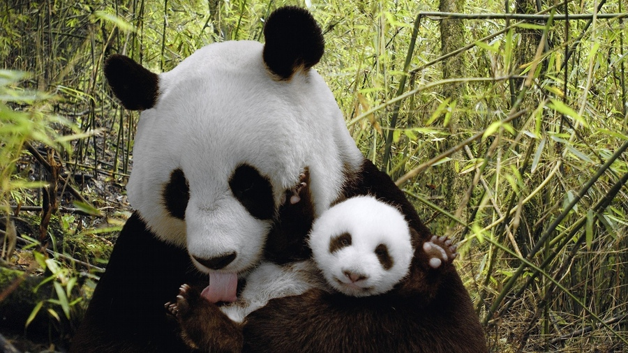 Картинки на компьютер природа и животные