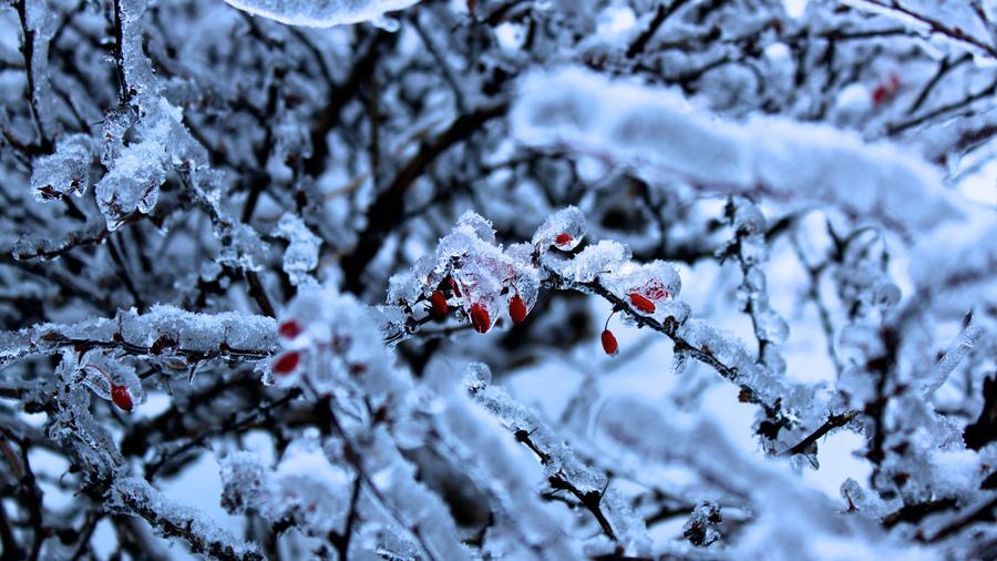 Картинки на рабочий стол зима с ягодами