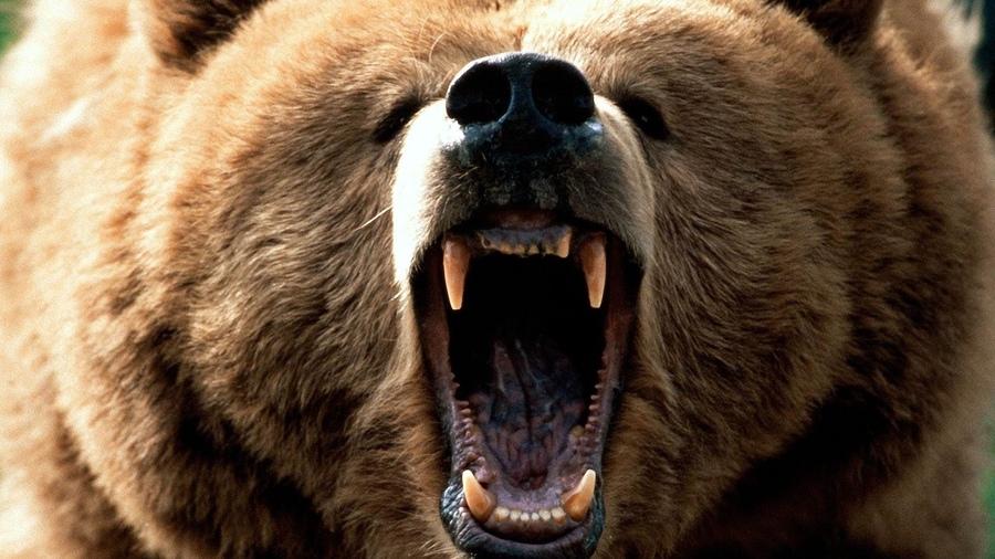 стол на рабочий фото медведи