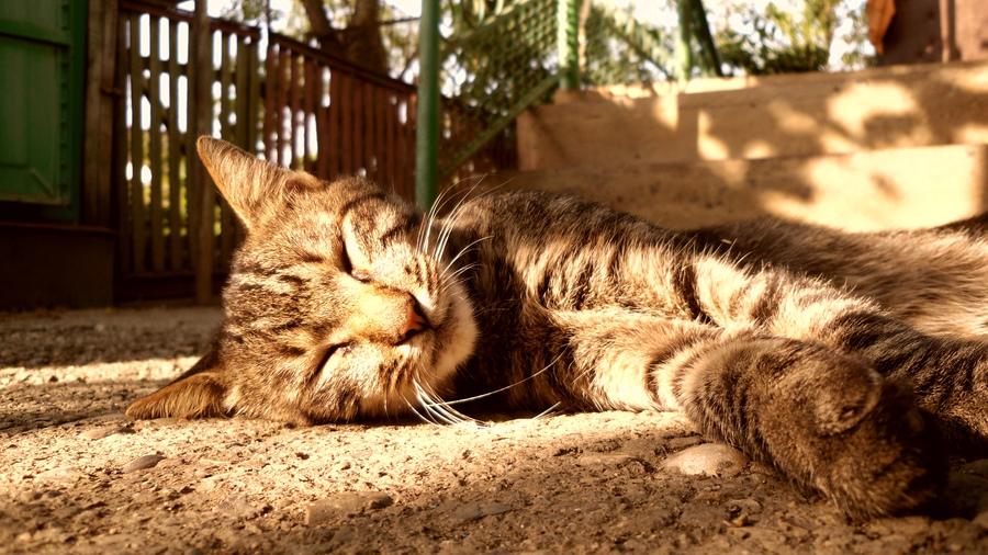 Песня «Кот и котлета» - YouTube | 506x900