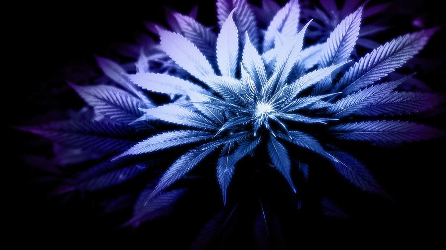 Марихуана обои для планшета барселона марихуана