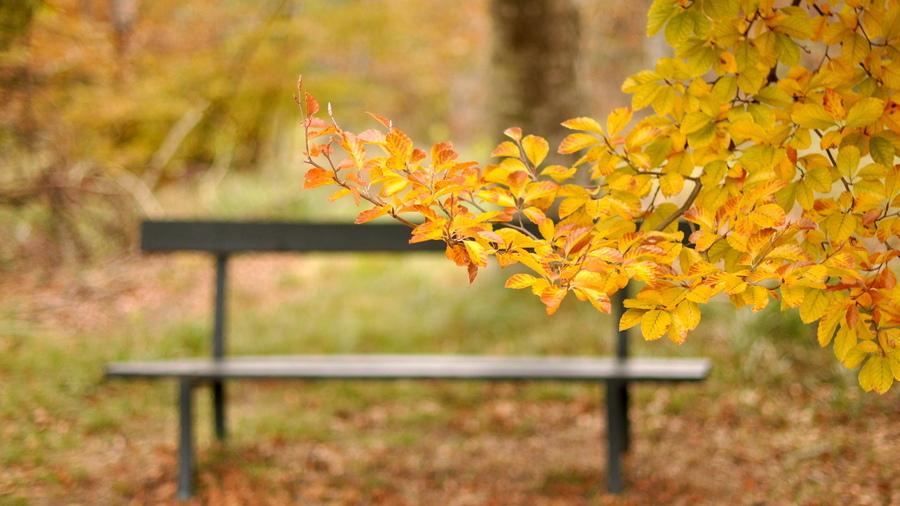 Картинки для рабочего стола осень скамейка