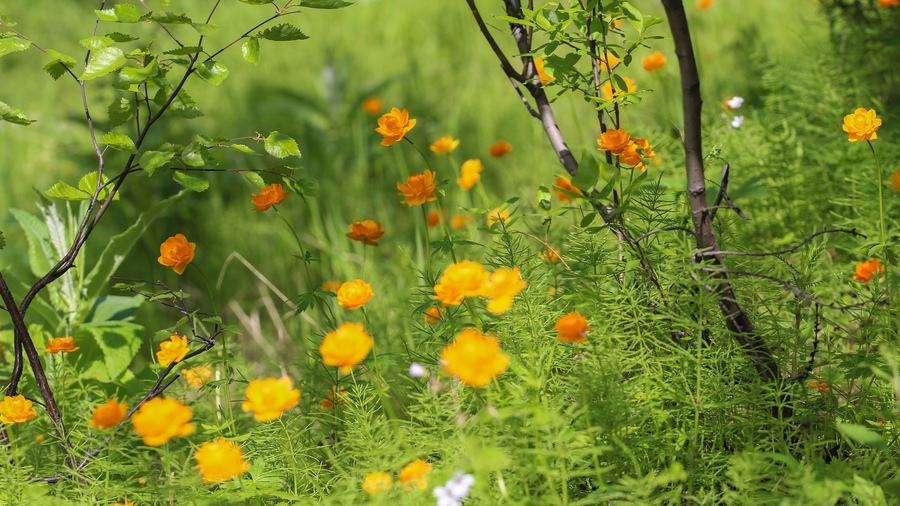 Картинки на стол лето цветы