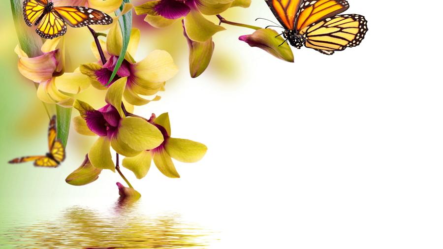 Картинки на телефон природа бабочки