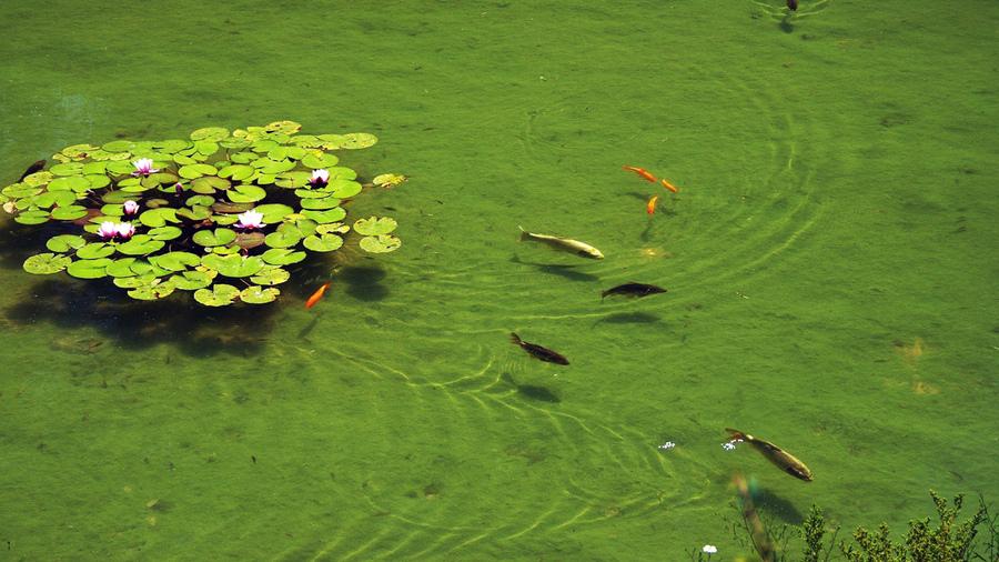 картинки пресные водоемы уместен