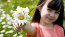 Romantic little girl , rose, happiness, cute, children, sunflower, beautiful, flower, child , smile ...