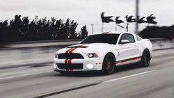 mustang, Ford, белый, мустанг, gt500, shelby, мускул кар, muscle car, форд