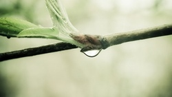 nature, макро, капля воды, macro, 2560x1600, branch, природа, росток, water drop, sprout, ветка ...
