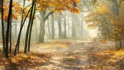 forest , leaves, landscape, morning, misty, road, nature, sun rays, beautiful, autumn trees  ...