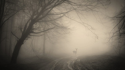 deer, nature, trees, лес, creepy, misty, жуткий, landscape, деревья, forest
