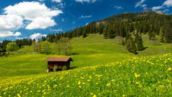 trees, sky, clouds, grass, green field, germany, landscape, pasture in the bavarian alps, nature ...