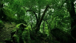 forest, tropical, forest, nature, trees, landscape