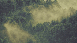 лес, туман, wood, fog, nature green, mountain, iphone, ipad, retina