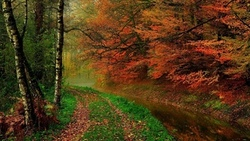 hdr, leaves, river, autumn, деревья, walk, листья, trees, nature, forest, water ...