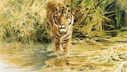 рисунок, живопись, donald grant, drawing, tiger, painting