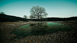 дерево, вода, water, trees, фото, природа, Вечер, widescreen, небо, обои, nature wallpspers, landscape, пейзаж