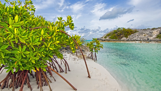 beach, мангры, песок, Galloway, long island, mangrove,  bahamas, деревья