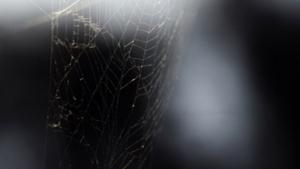 black, веб- пауков, spiders, web, wallpaper, черный, обои