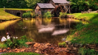 forest, watermill, river, wood, trees, calm