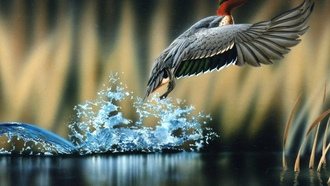 duck, water, flying