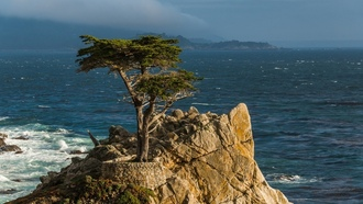 monterey peninsula, pacific, lone cypress, california