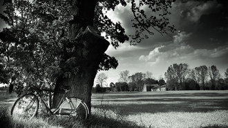 landscape, black and white, tree, Bicycle, field, nature, велосипед
