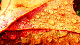 colorful leaf and drops, капли, лист, осень