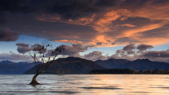 birds on a tree, lake wanaka, new zealand