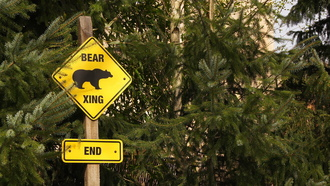 bear, zoo, logo, end