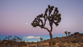 joshua tree national park, usa, california, калифорния, сша