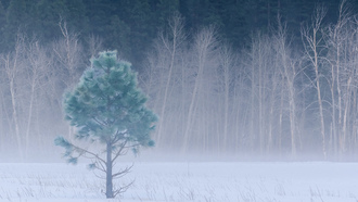winter, fog, california, йосемити, usa, yosemite national park, forest, snow, meadow, trees
