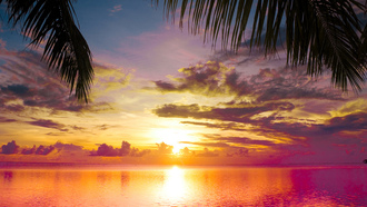 sea, beautiful, sky, scene, sunset between palms, nature, clouds, landscape, water