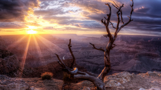 arizona, wood, grand canyon, sunset, rock, valley, sun