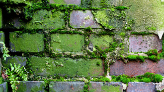 moss, brick, pattern, wall