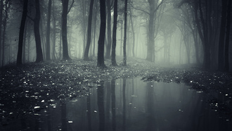 leaves, misty, road__lake, nature, trees, creepy, landscape, forest, леса, deep