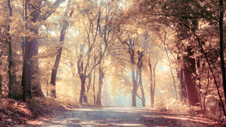 beautiful, nature, leaves, road, landscape, autumn trees , fog, sunbeams