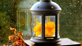 фонарь, drops, flower, leaves, autumn, window, paper, spring, narcissus, lantern