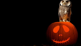 art, owl, pumpkin, halloween