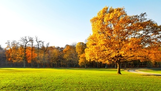 grass.road, landscape, nature, garden, autumn trees , panorama , beautiful, green field, scenic
