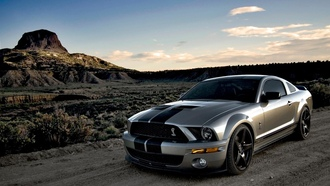 shelby, cobra, mustang