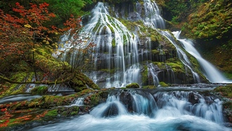 panther creek falls, gifford pinchot national forest, лес, дерево, водопад, природа