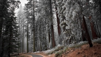 road, winter, trees, forest, snow