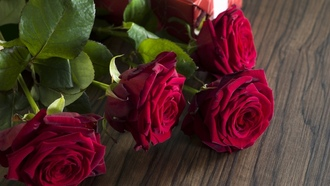 красные розы, valentines day, love, gift, romantic, roses