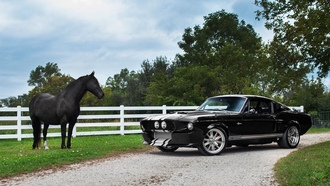 ford mustang shelby gt 500, muscle, horse, лошадь